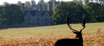 Stag.at.Knole..Credit.National.Trust..Jo.Hatcher (1)